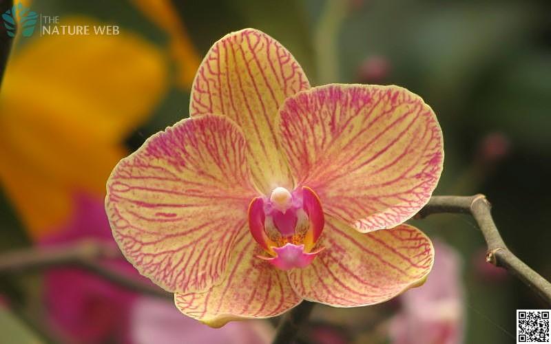 Flowers (plantae)